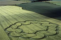 crops09