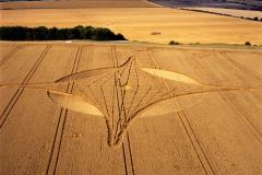 crops11