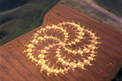 crops12