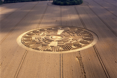 crops14