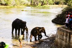 elephants-09