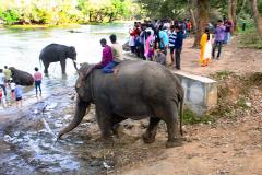 elephants-12