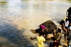 elephants-13