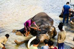 elephants-14