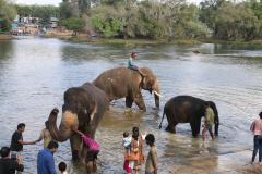 elephants-19