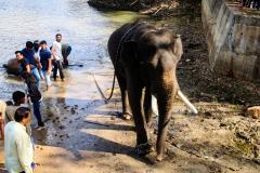 elephants-20