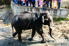 elephants-21