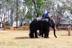 elephants-26