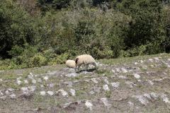 Machu-Pichu47
