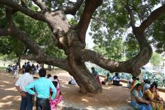 mamallapuram-31